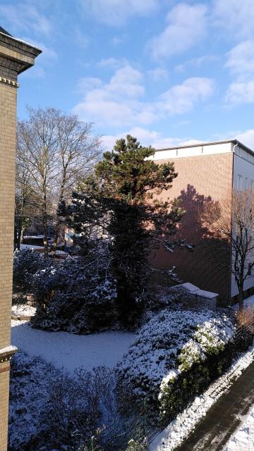Blick auf verschneite Gärten