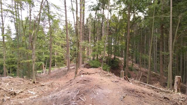 Waldweg, irgendwo
