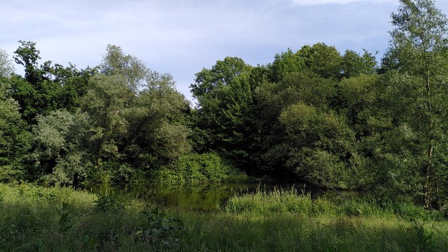 Viele unterschiedliche Laubbäume, ein See und Wildgras im Vordergrund