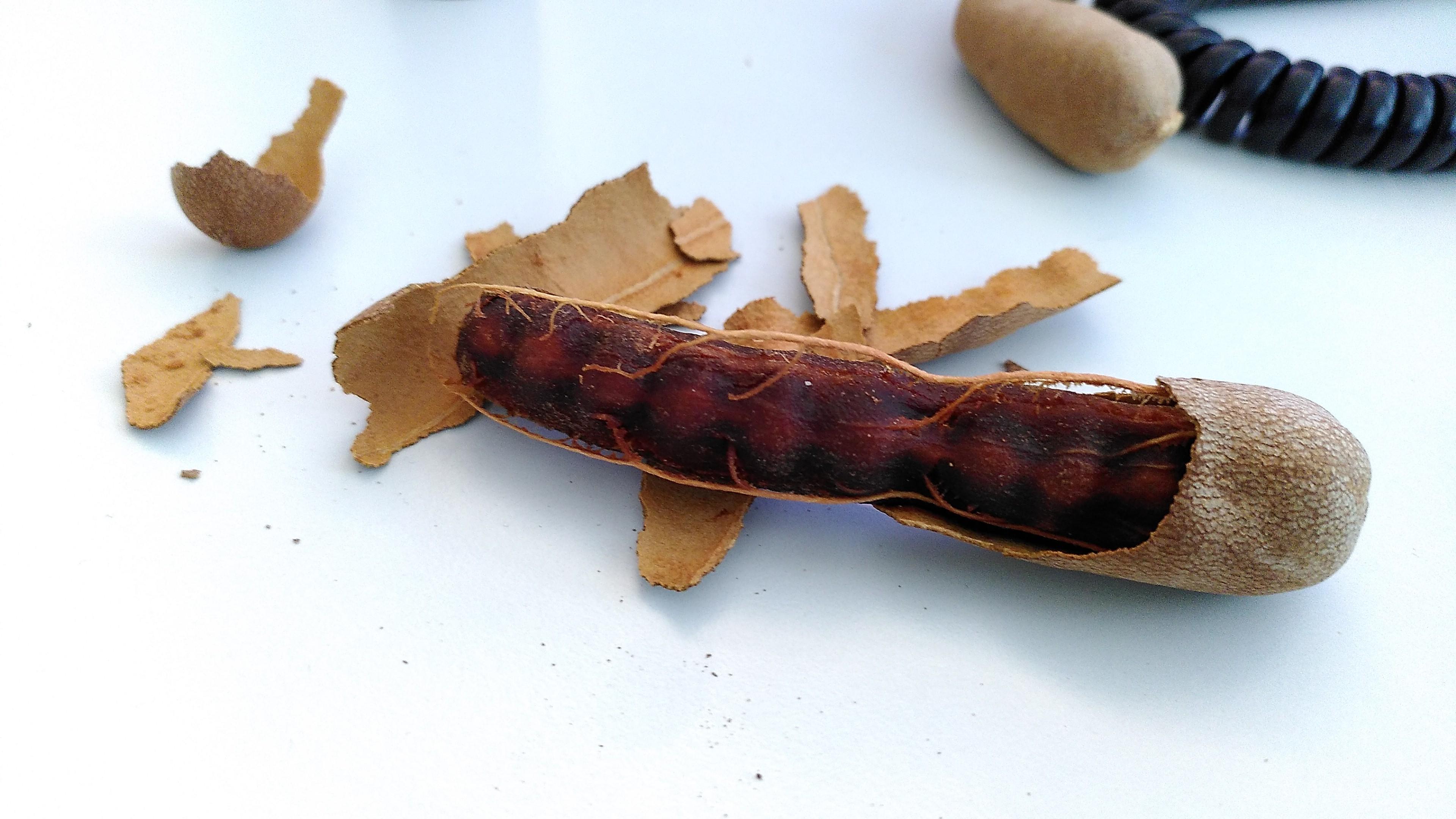 Teilweise geöffnete hellbraune Tamarinden-Hülse mit freigelegtem dunkelbraunen Fruchtfleisch. Optisch erinnert es an Kot.