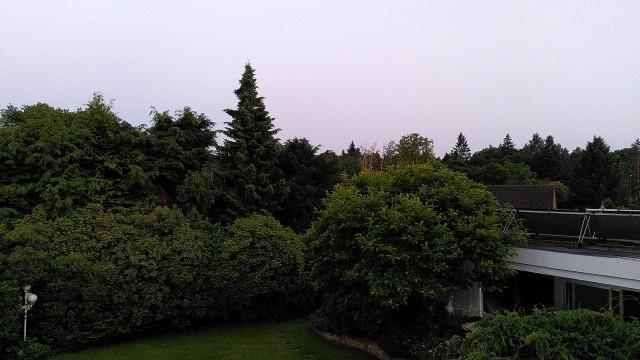 Blick auf Bäume im Garten hinter dem Haus
