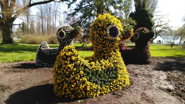 Ente aus Blumen