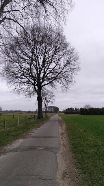 Feldweg zwischen Feldern